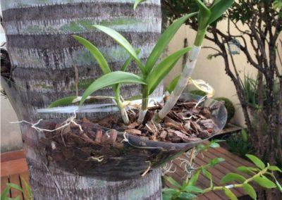 Orquídeas plantadas com suporte para orquídeas Flóris